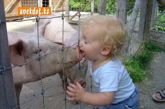 Свинья и маленький ребенок лизун