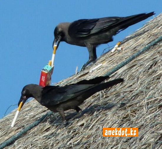 Вороны устроили перекур