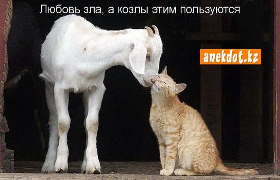 Любовь зла, а козлы этим пользуются!