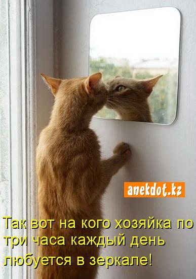 Так вот на кого хозяйка по три часа каждый день любуется в зеркале!