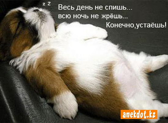Весь день не спишь... Всю ночь не жрешь... Конечно, устаешь!