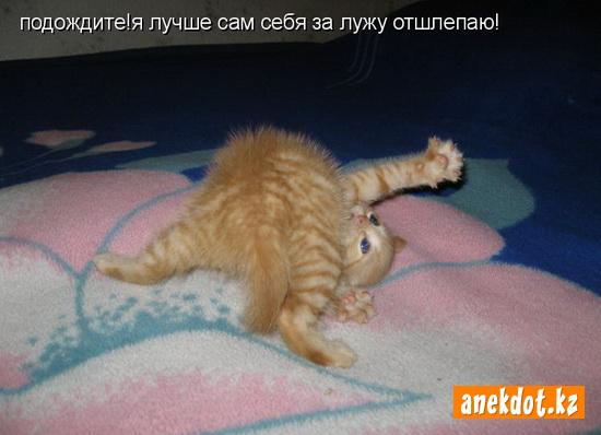 Маленький котенок - Подождите! Я лучше сам себя за лужу отшлепаю!