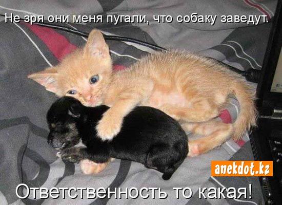 Не зря они пугали, что собаку заведут. Ответственность то какая!